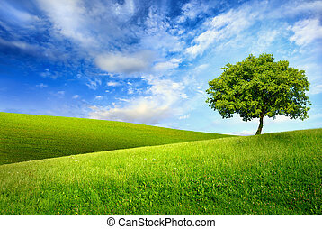 Single tree on top of a green hill - Scenic paradise with a...