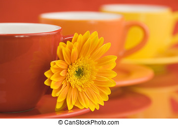 Color caps and gerbera - Row of color cups and beautiful...