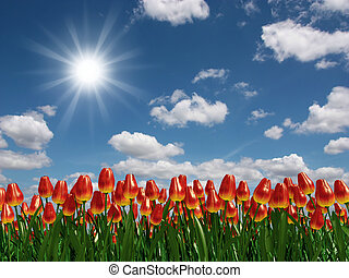 Tulip flowers field - Very high resolution 3d rendering of a...