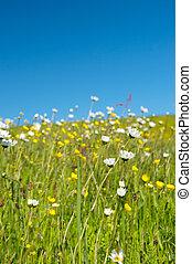 Wild flowers in summer