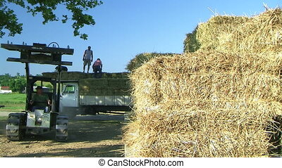 Loading Hay - Farmer uses bobcat to load hay onto truck.