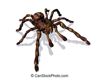Spider - 3D rendering of a giant spider on white background...