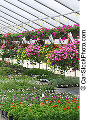 Greenhouse Flowers - Hanging flowers and plants inside a...