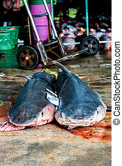 dead sharks at fish market Ranong,Thailand