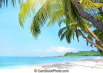 Beach with palm trees Klong Prao Beach, Koh Chang, Thailand