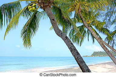 Beach with palm trees. Koh Chang, Thailand