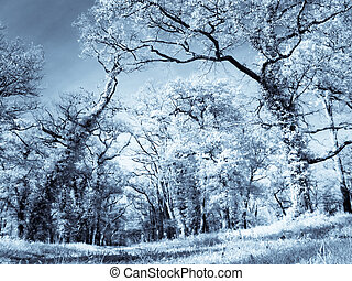 Infrared forest - Infrared picture of a beautiful forest