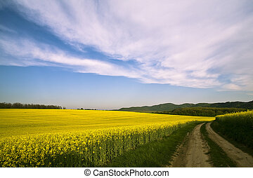 Canola Field third