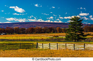 Fences and pine tree in a field in Gettysburg, Pennsylvania....
