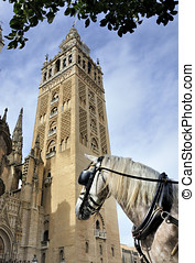 Horse in front of the Seville Cathedral in Spain.This...