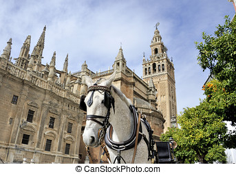 Seville cathedral - Horsedrawn carriage waiting for tourists...