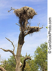 Vulture nest in a dead tree