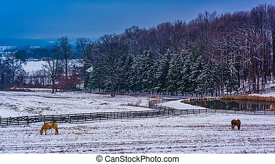 Horse and pond on a  farm in rural York County, Pennsylvania.