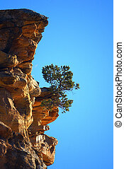 Sprung from a cliff - A tree growing out from a crevice of a...