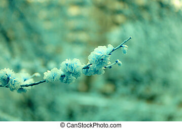 Elm tree twig - A closeup picture of an elm tree twig,...