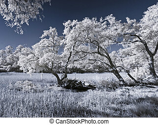 infrared landscape of marsh and trees