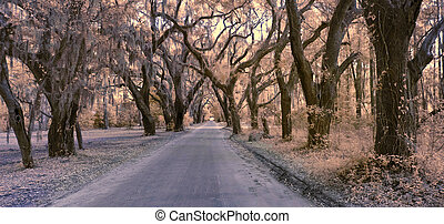 infrared photo of road and forest canopy - false color...