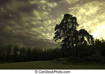 Trees in a meadow below a moody sky - A summer landscape...