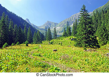 Meadow and forest in Fagaras mountains, Sambata valley.