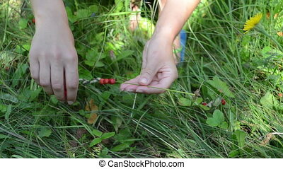 hands wild berry swing - girl hands gather pick harvest wild...