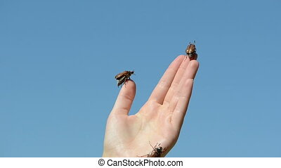 thumb climbs bugs - woman palm beetle crawls four climbs...