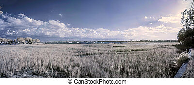 infrared panorama of water, reeds, and boats - 180 degree...