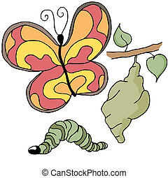 Butterfly Stages - An image of the stages of a butterfly.