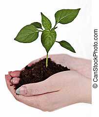 Small little plant in woman's hand