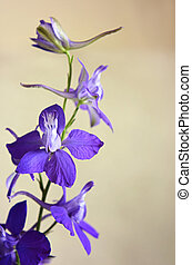Delphinium branch on a beige background