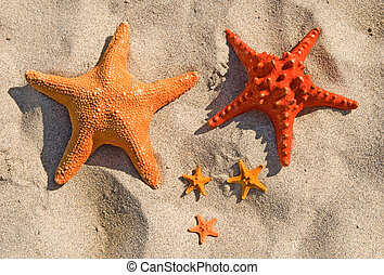 Family of large and small starfish on a sandy beach