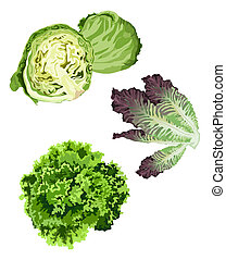 Lettuce - Clip-arts of various lettuce types