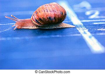 snail crosses the finish line as winner