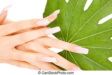 female hands with green leaf - picture of female hands with...