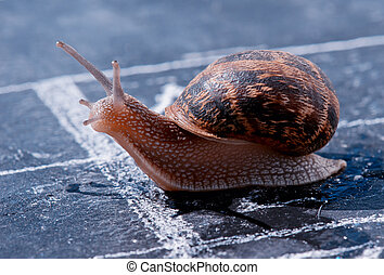 snail crosses the finish line as winner - snail crosses the...