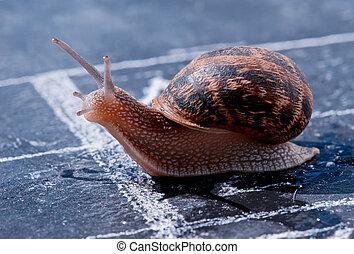 snail crosses the finish line as winner - snail crosses the...
