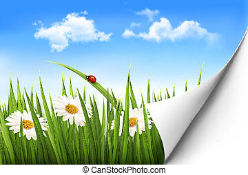 Spring background with flowers, grass and a ladybug. Vector.
