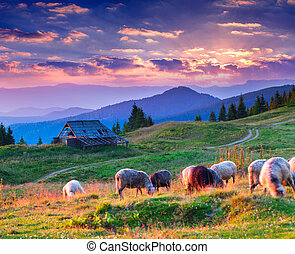 Colorful summer landscape in mountain village Sunset