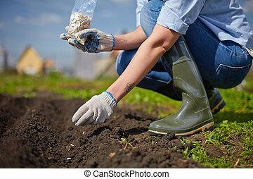 trabalho, jardim