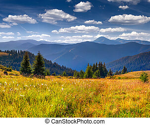 Beautiful summer landscape in the mountains with a feather grass