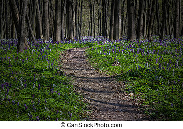 Mystical path in a dark forest in spring