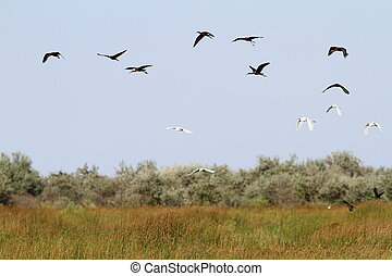 flock of wild birds in danube delta