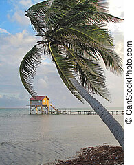 Palm Tree and Colorful Hut - Palm tree and colorful hut...