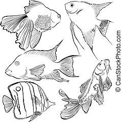 collection of aquarium fish
