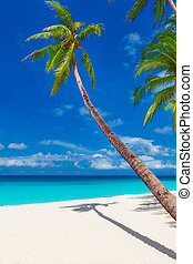tropical sand beach with palm trees, summer vacation...