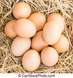 eggs in a straw nest - chicken eggs in a straw nest