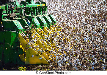Combine Harvester picking Cotton