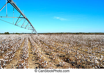 Landscape Pivot over Cotton Field Ready to Harvest
