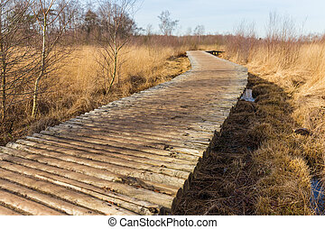 Elevated walking path through nature reserve - Elevated...