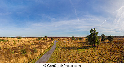 Hiking trail through heathland with tree in national park De...