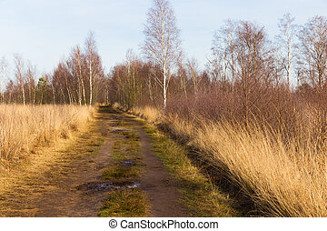 Muddy trail through heath and woods in national park De...